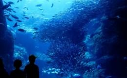 aquarium-top