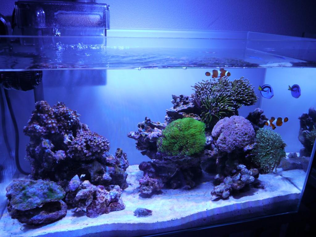 サンゴ水槽
