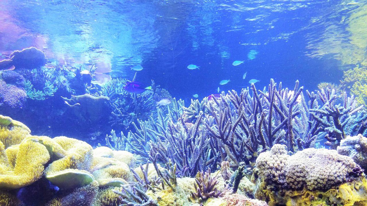 サンゴってどんな生き物?サンゴについて簡単におさらいALL BLUE | ALL ...